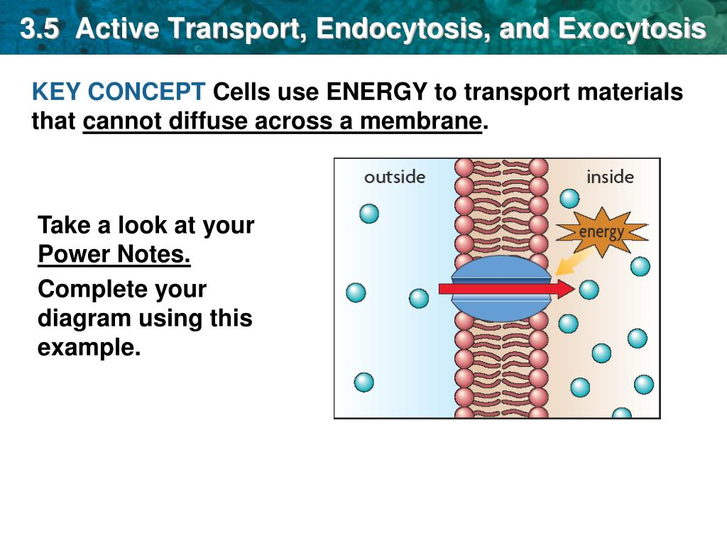 Ppt 3 5 Active Transport Endocytosis And Exocytosis Powerpoint Presentation Id 7002233