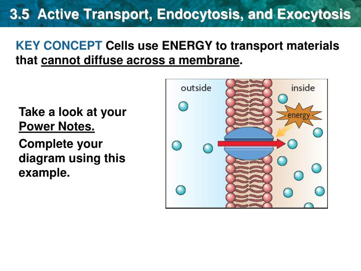 Ppt 35 Active Transport Endocytosis And Exocytosis Powerpoint