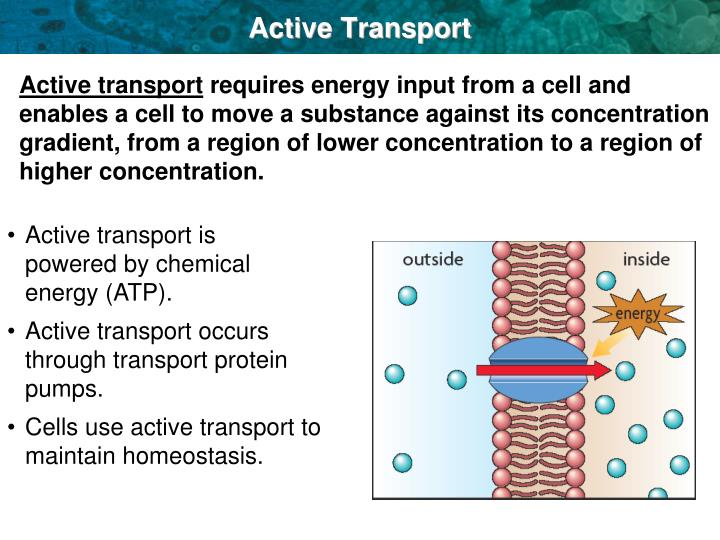 Active transport requires what kind of energy