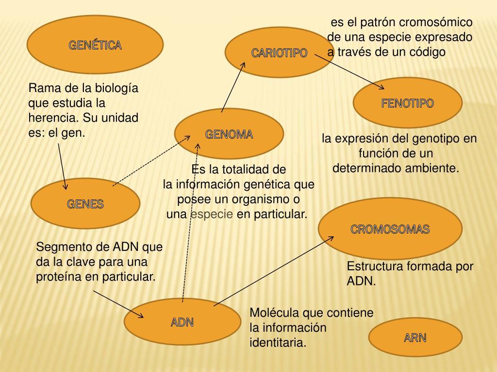 Ppt Genética Powerpoint Presentation Free Download Id