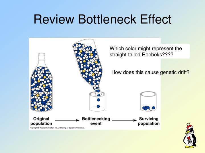 Review Bottleneck Effect