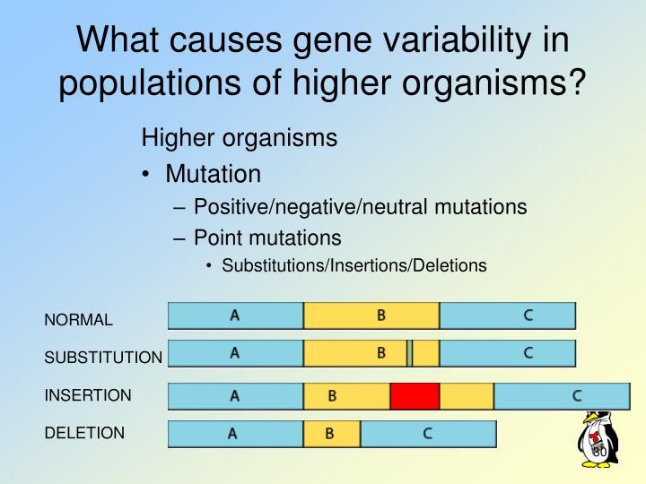Higher organisms