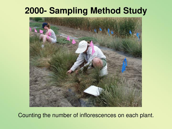 2000- Sampling Method Study