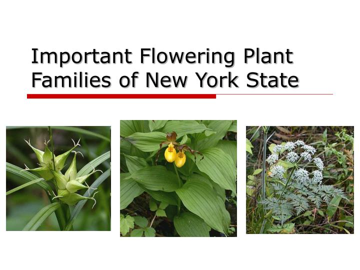 important flowering plant families of new york state n.