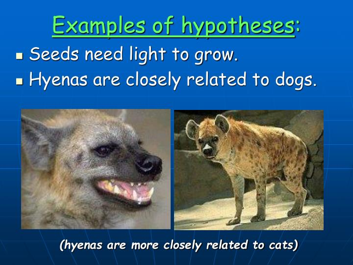 Examples of hypotheses