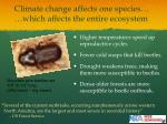 climate change affects one species which affects the entire ecosystem