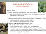artemisia absinthium wormwood absinthe