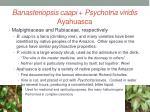 banasteriopsis caapi psychotria viridis ayahuasca