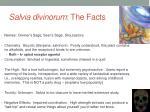 salvia divinorum the facts