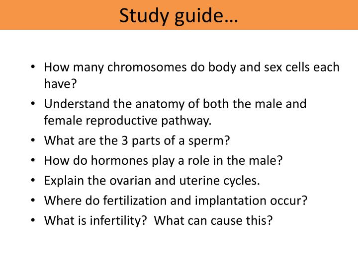 Ppt Study Guide Powerpoint Presentation Id7020575