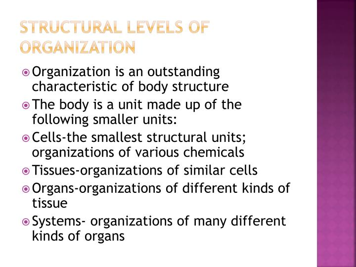Structural levels of organization