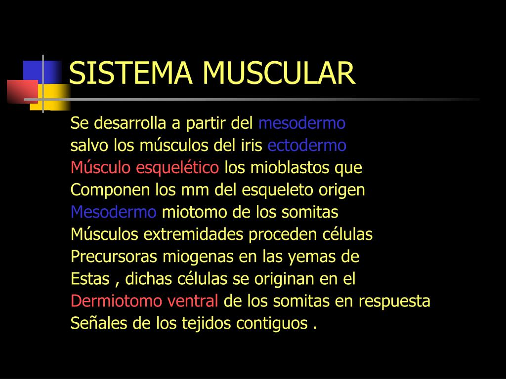 Ppt Sistema Muscular Powerpoint Presentation Free