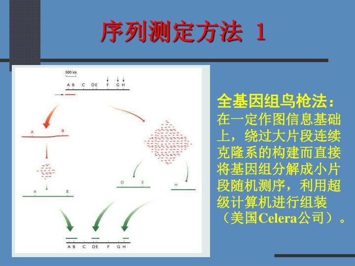 序列测定方法