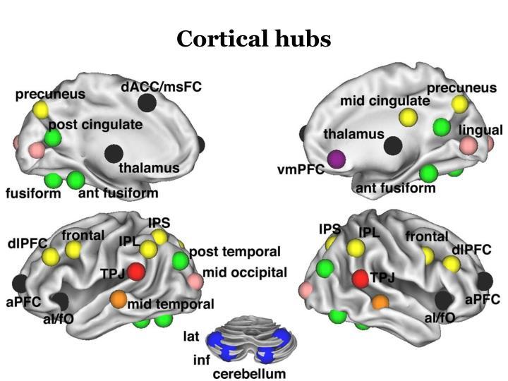 Cortical hubs
