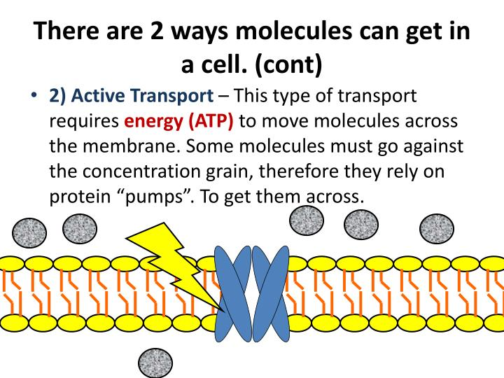 There are 2 ways molecules can get in a cell. (cont)