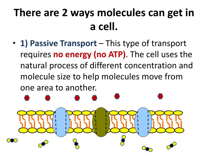 There are 2 ways molecules can get in a cell.