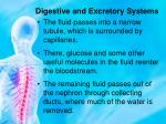 digestive and excretory systems10