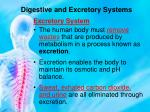 digestive and excretory systems7