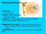 hearing and balance ear