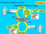 regulation of blood sugar