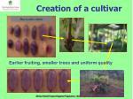 creation of a cultivar
