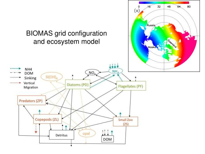 BIOMAS grid configuration