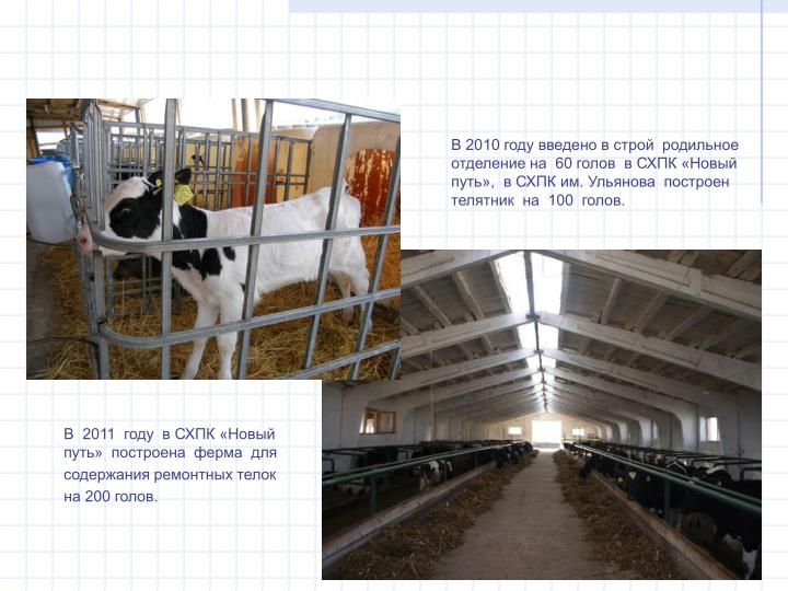 В 2010 году введено в строй  родильное отделение на  60 голов  в СХПК «Новый путь»,  в СХПК им. Ульянова  построен телятник  на  100  голов.