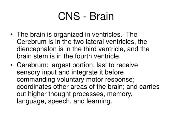 Cns brain