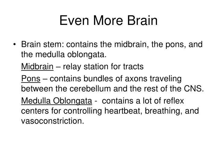 Even More Brain