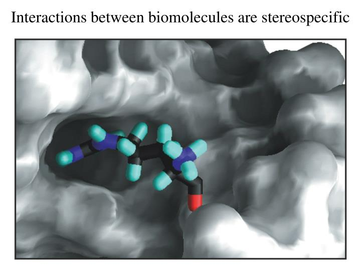 Interactions between biomolecules are stereospecific