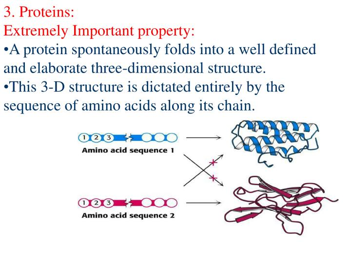 3. Proteins: