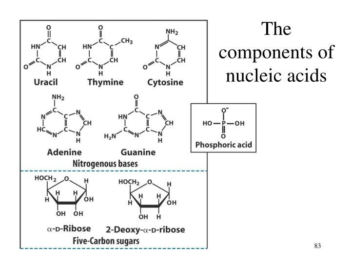The components of nucleic acids