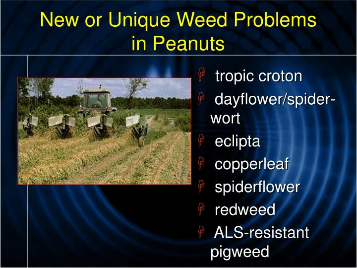 New or unique weed problems in peanuts
