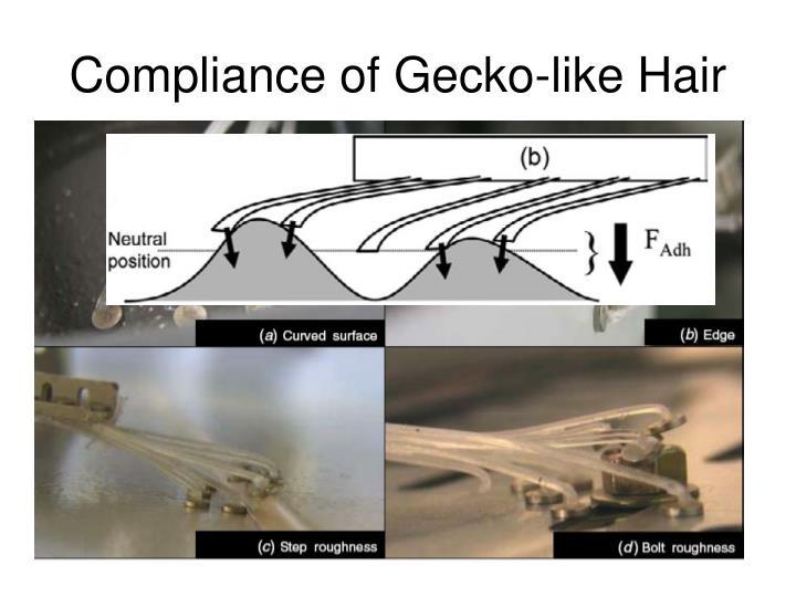 Compliance of Gecko-like Hair