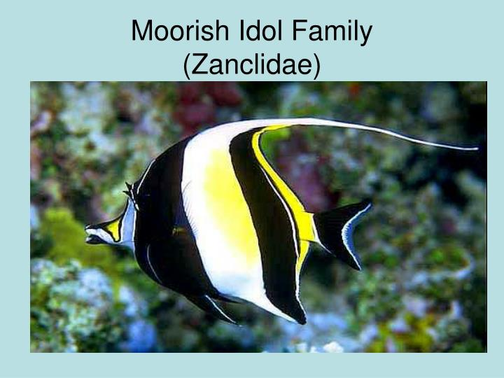 Moorish Idol Family