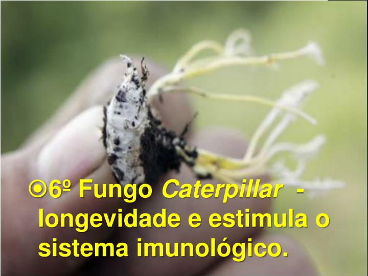 6º Fungo