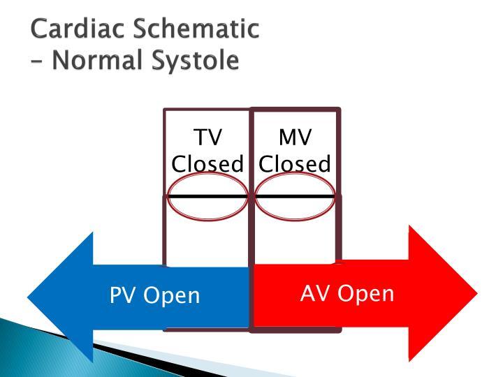 Cardiac Schematic