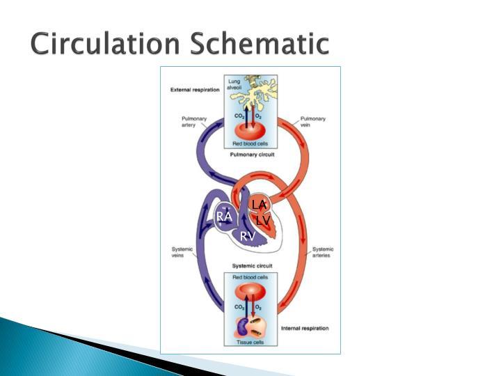 Circulation Schematic