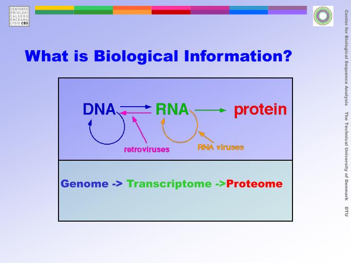 What is Biological Information?