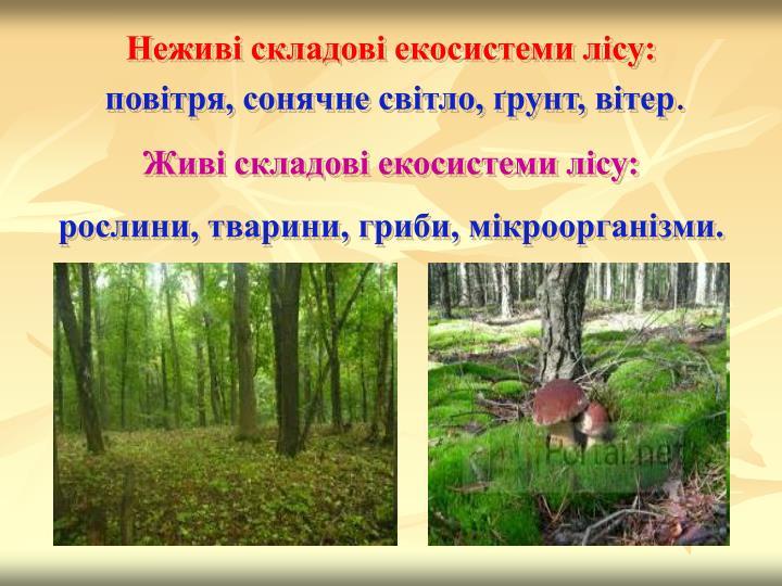 Неживі складові екосистеми лісу: