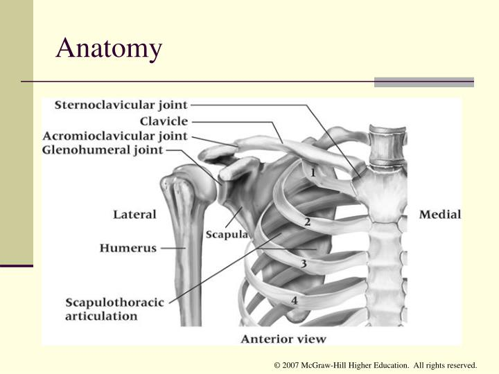 Ppt Chapter 18 The Shoulder Complex Powerpoint Presentation Id
