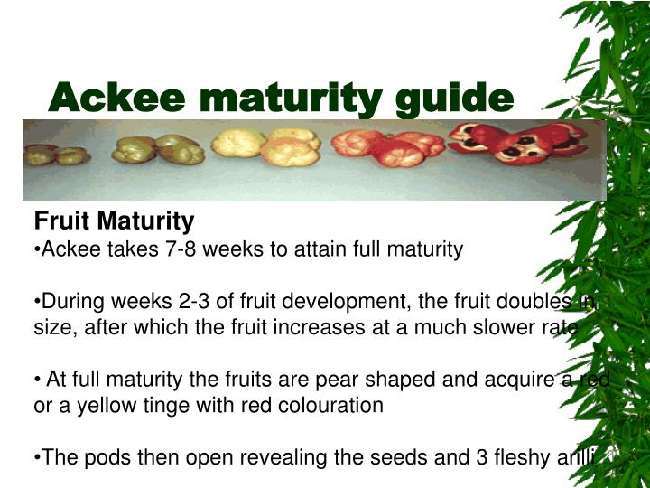 Ackee maturity guide