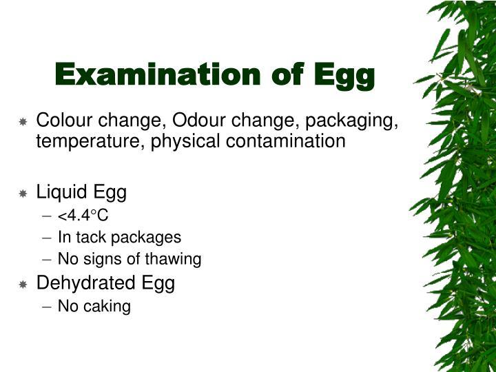 Examination of Egg