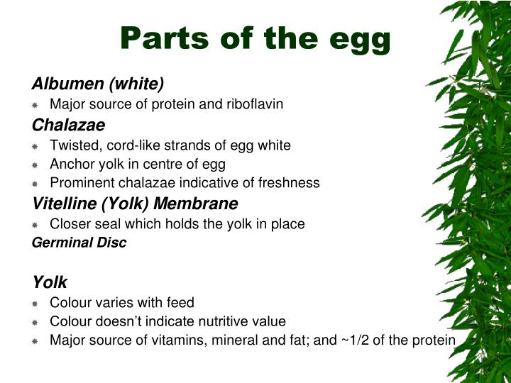 Parts of the egg