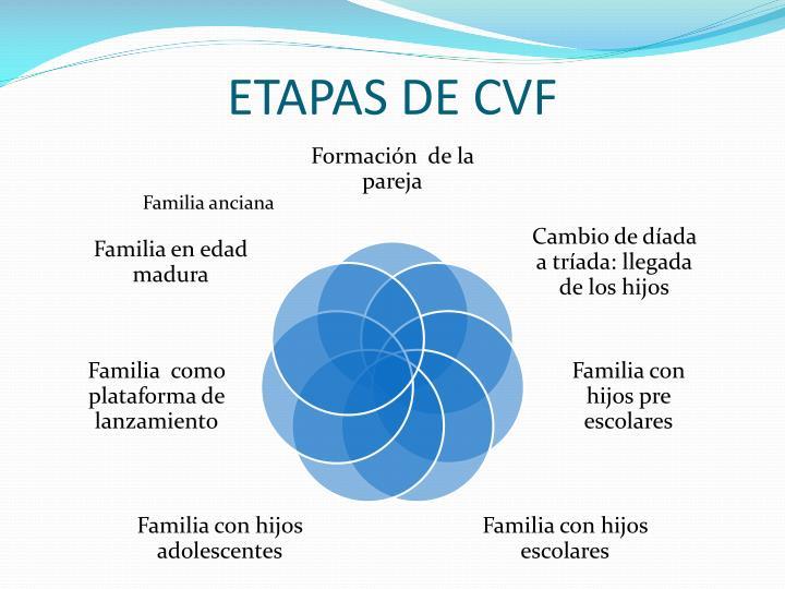 ETAPAS DE CVF