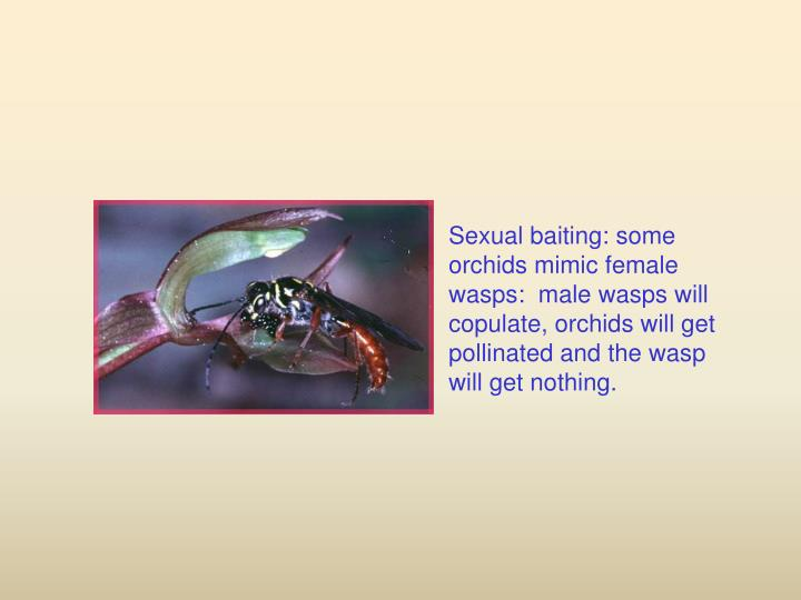 Sexual baiting: some orchids mimic female wasps:  male wasps will copulate, orchids will get pollinated and the wasp will get nothing.