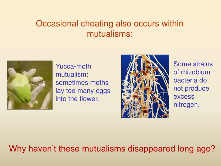 Yucca-moth mutualism: sometimes moths lay too many eggs into the flower.