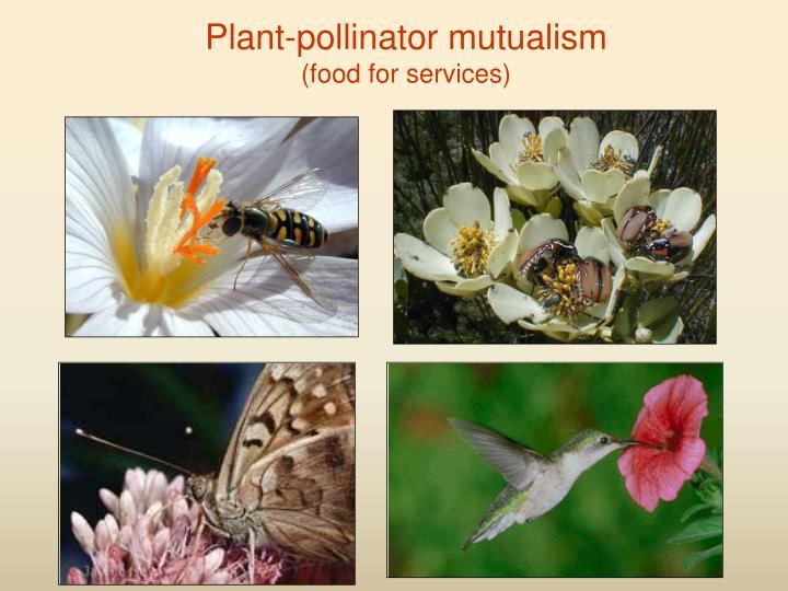 Plant-pollinator mutualism