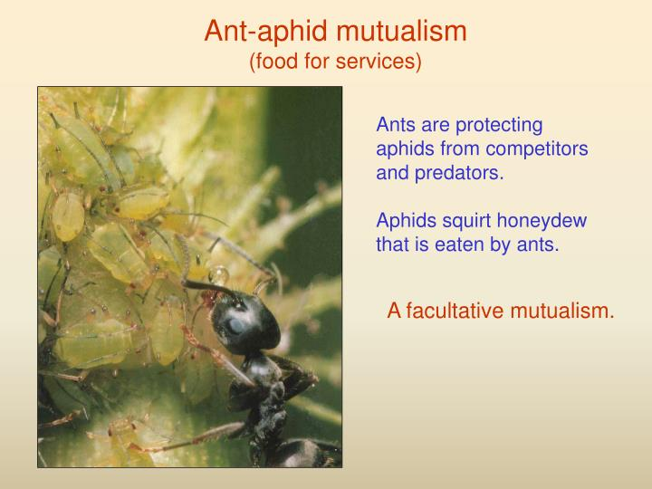 Ant-aphid mutualism