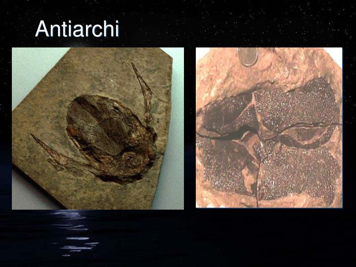 Antiarchi